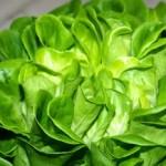 La lechuga, el ingrediente perfecto de las ensaladas
