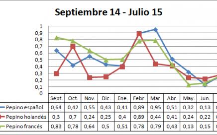 Precio en origen pepino campaña 14-15