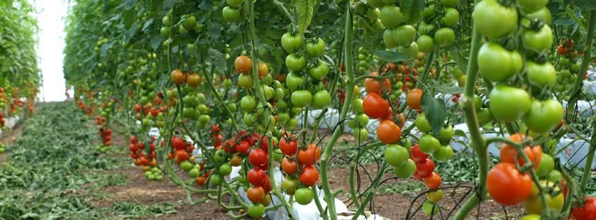 Precios de hortalizas de Almería por campaña