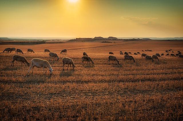 La carne ecológica y sus virtudes